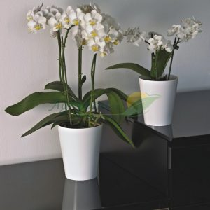 macetas decorativas clivo-orchidea